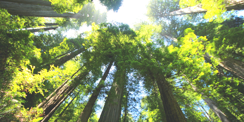 Fern Canyon Featured Img - Wandering Nobody Travel Blog
